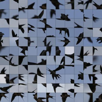 """""""Le Bleu du Ciel"""" - Bruissement © Édouard Taufenbach."""